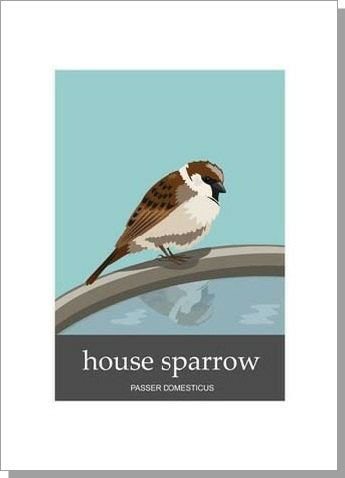 House Sparrow Passer Domesticus
